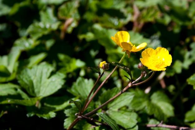 隣同士の2つの黄色い花の広角ショット