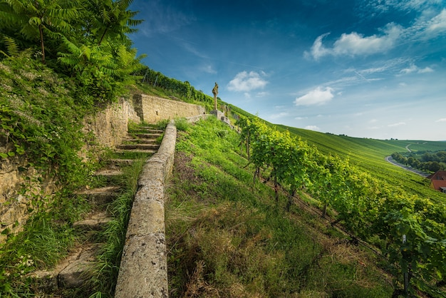 Wide angle shot of stairs surrounded by grapevines