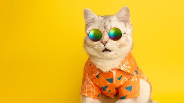 Широкий баннер с портретом белого британского кота в солнечных очках и оранжевой рубашке на желтой стене