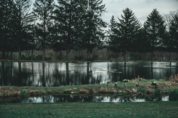 Wide beautiful shot of a lake surrounded by trees