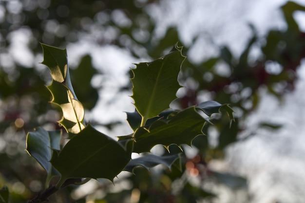 혈관 식물의 잎의 넓은 근접 촬영 샷