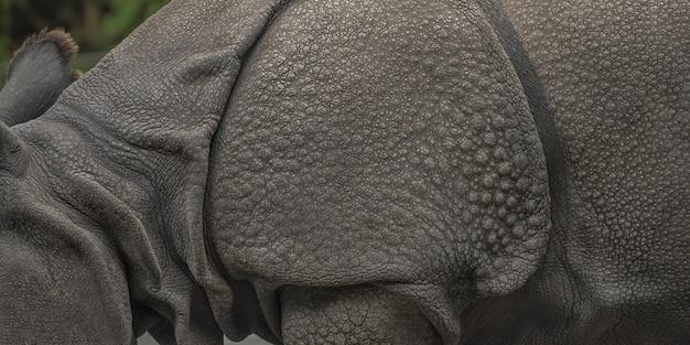 Colpo grandangolare del primo piano di un rinoceronte con uno sfocato