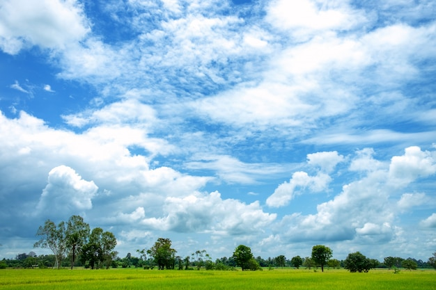 Wide green rice fields and blue skies
