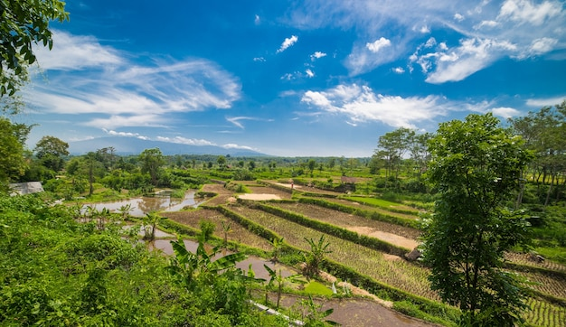 Wide green rice terraces at the bali