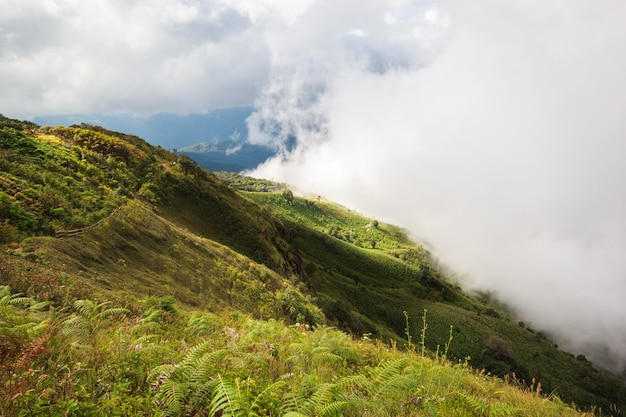 Wide meadow with mist and clouds on sunshine day at inthanon mountain, chiang mai, thailand