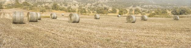 마른 풀과 건초 더미가 있는 농경지의 넓은 파노라마