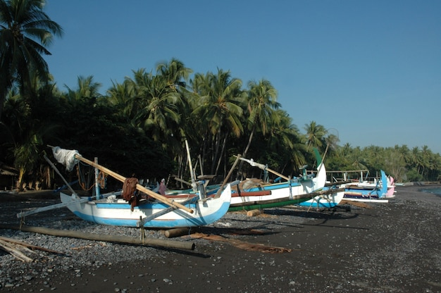 Wide shot of canoes on the shore by the sea surrounded by tropical trees under a clear sky