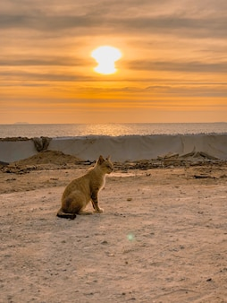 Wide shot of a cat sitting on the ground by the sea and sunset