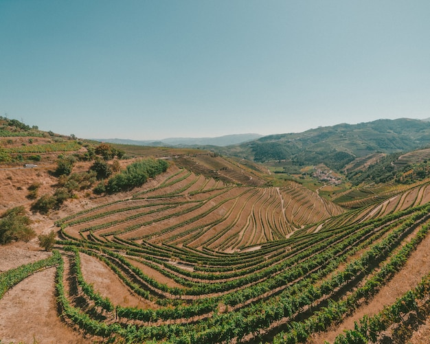 Wide shot of a field in douro valley portugal on a sunny day