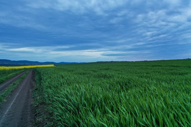 Wide shot of a grass field near a pathway with beautiful blue sky