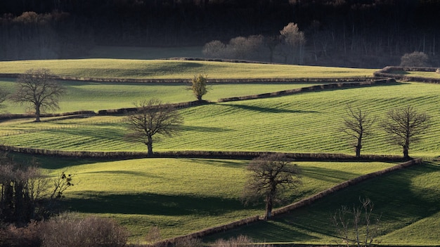 Wide shot of grassy fields with leafless trees at daytime
