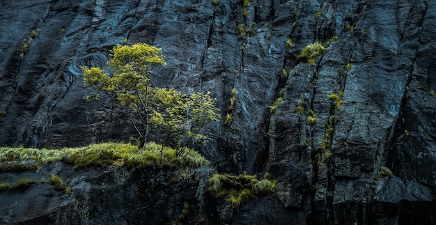 Wide shot of green trees near a cliff