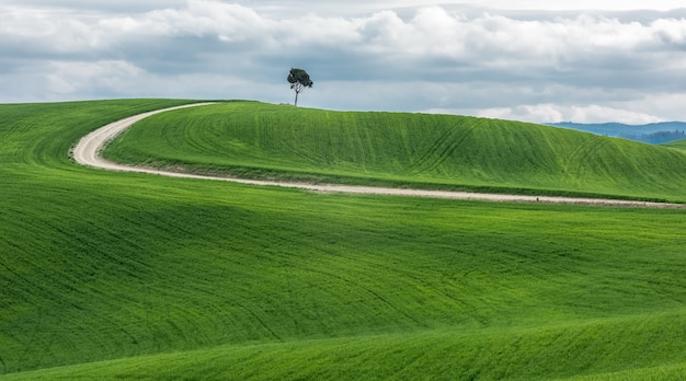 Wide shot of an isolated green tree near a pathway in a beautiful green field