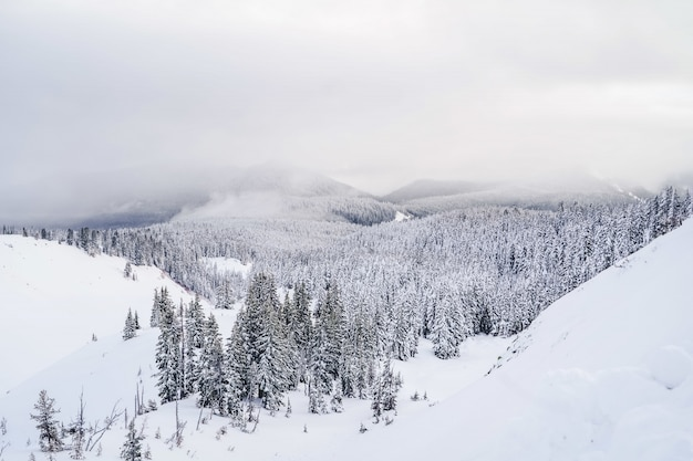 Wide shot of mountains filled with white snow and lots of spruces under a sky