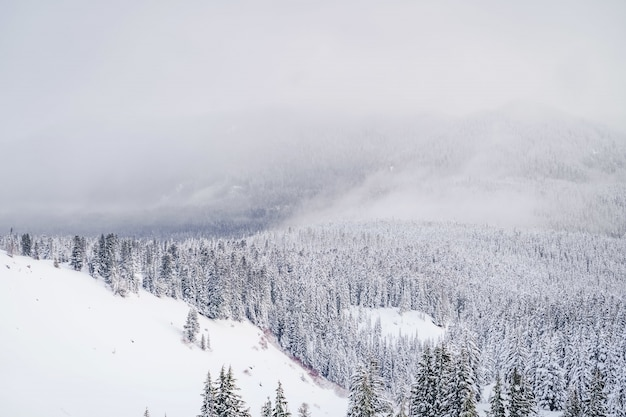 Wide shot of mountains filled with white snow and tons of spruces