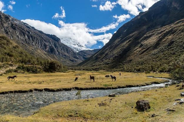 Панорамный снимок поля с едящими животными в окружении гор и ручья с голубым небом