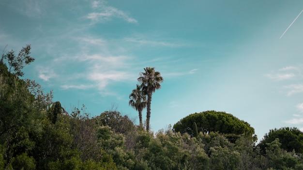 Широкий снимок пальм и зеленых растений под голубым небом