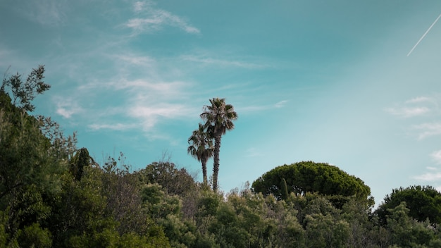 Wide shot of palm trees and green plants under a clear blue sky
