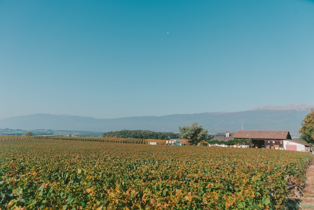 Wide shot of a peaceful field with a house and a clear blue sky in switzerland