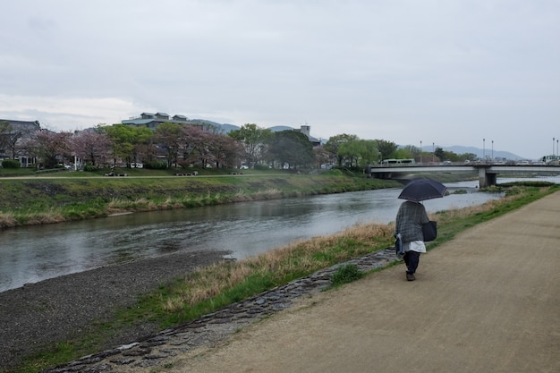 Wide shot of a person with an umbrella walks along the kamo river in kyoto, japan