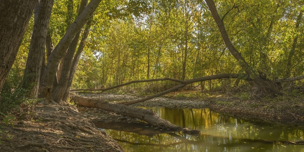 Wide shot of a river in the middle of green leafed trees in the forest at daytime