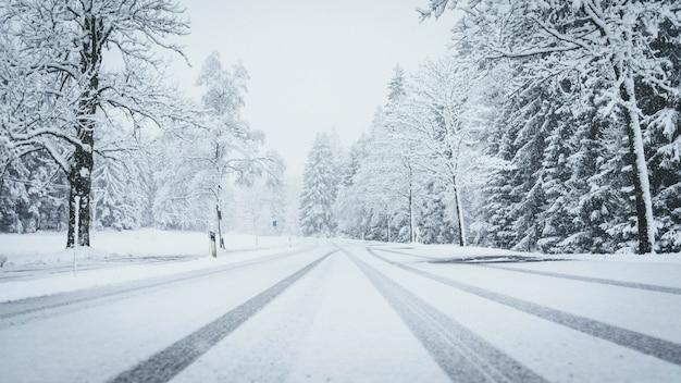 Panoramica di una strada interamente coperta di neve con alberi di pino su entrambi i lati e tracce di auto