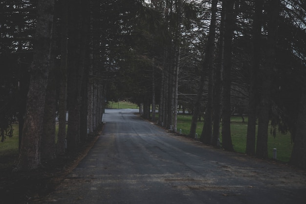 Wide shot of a road surrounded by trees in a forest