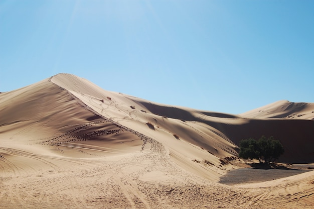 Wide shot of sand dunes in the desert on a sunny day