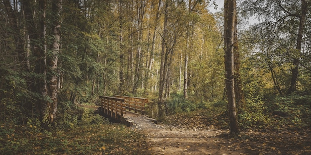 Wide shot of a wooden bridge in the middle of a forest with green and yellow leafed trees