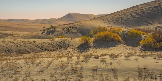 Wide shot of yellow leafed plants  in the desert with sand dune and mountain