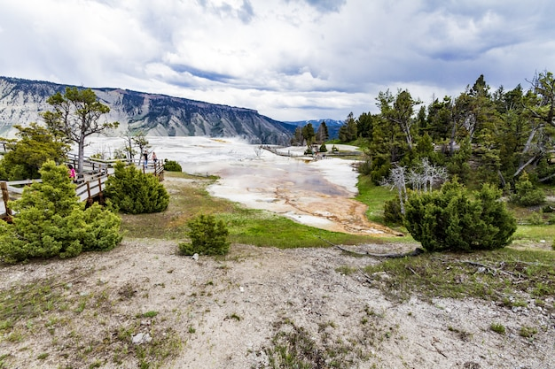 Wide shot of yellowstone national park full of green bushes and trees