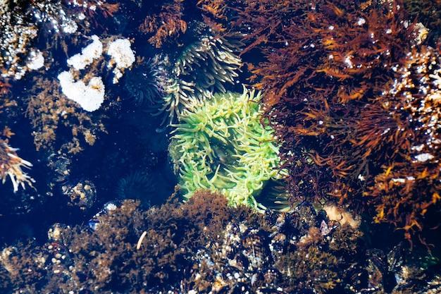 녹색과 갈색 산호초의 넓은 수중 촬영