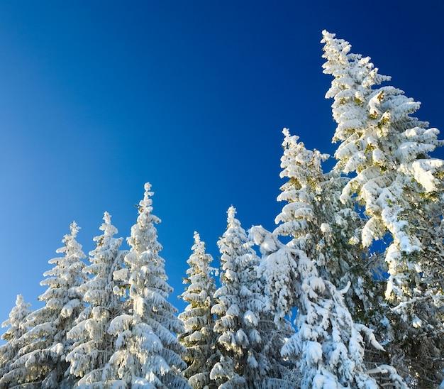 青い深い空の背景に冬の樹氷と雪に覆われた木々の広い視野
