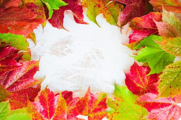 秋のコンセプトwih明るい赤の葉