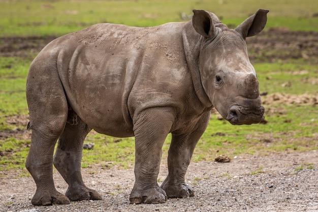 野生のアフリカ動物
