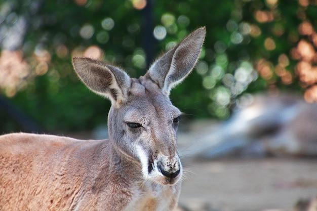 Дикие животные в зоопарке таронга в сиднее, австралия