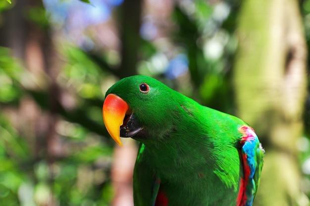 オーストラリア、シドニーのタロンガ動物園の野生動物