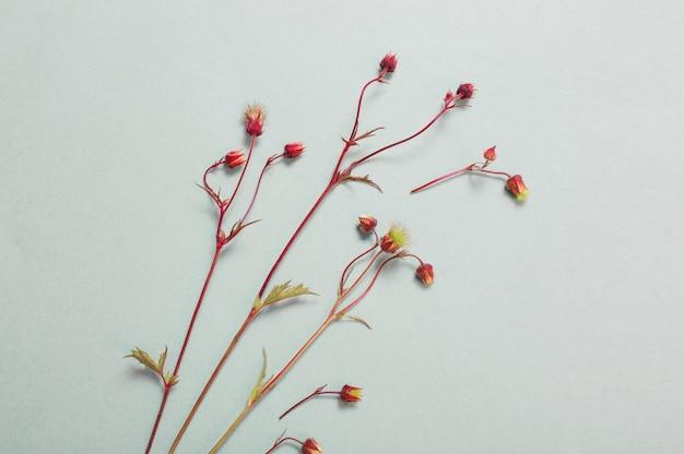 종이 바탕에 야생 avens 꽃