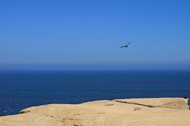 Wild bird flying and two others perching on the cliff at paracas national reserve in ica, peru