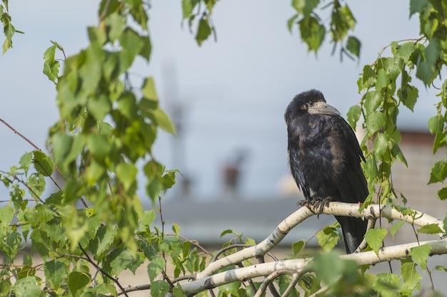 悪天候、雨の中の野鳥の生活