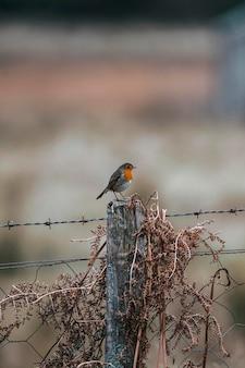 柵の上の野鳥