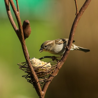 Дикие птицы клюют корм из кормушки в саду зимой, европа
