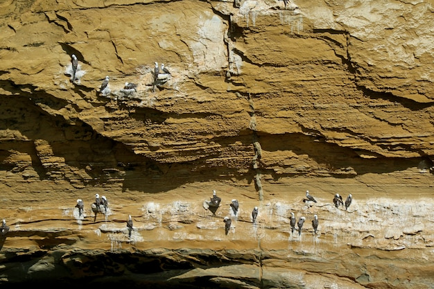 Wild birds perching on la catedral arch, the famous rock formation at paracas, peru