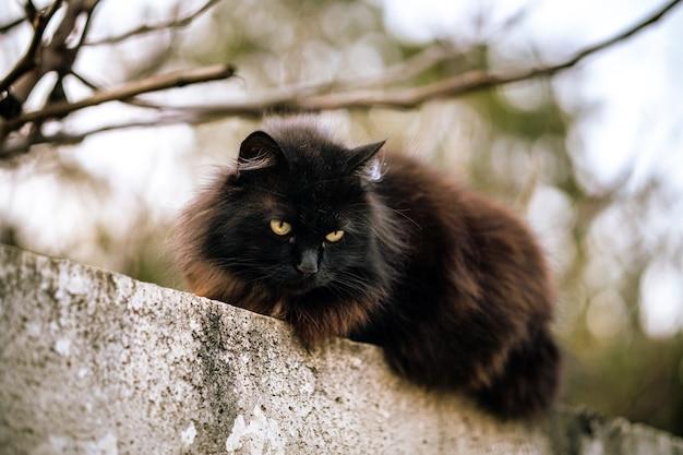 緑の目とぼやけた背景を持つ野生の黒猫