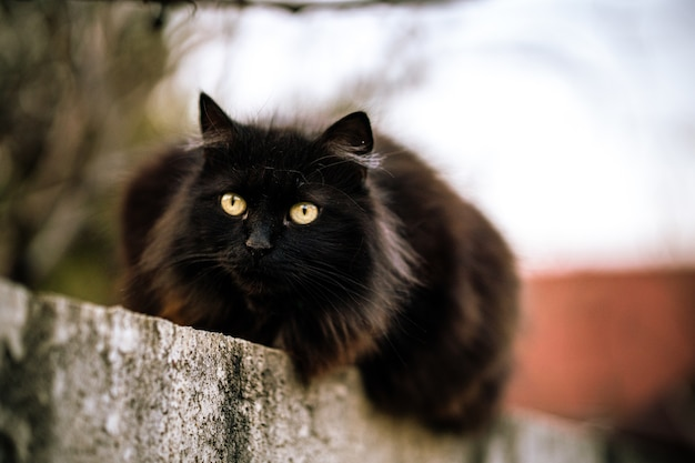 Wild black cat with green eyes
