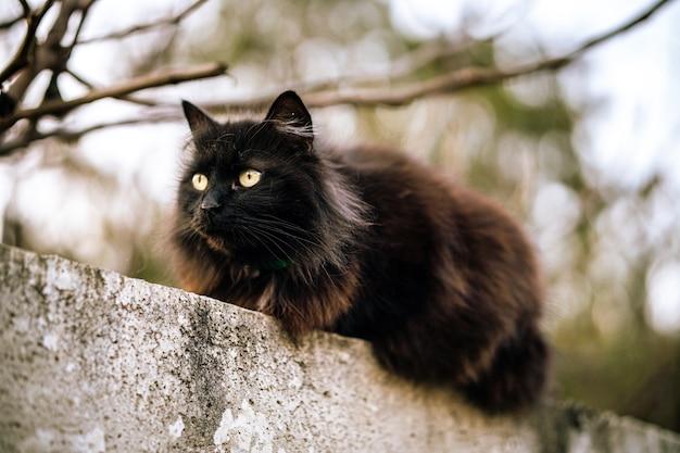 녹색 눈을 가진 야생 검은 고양이
