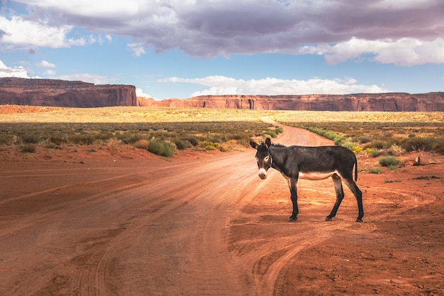Wild burro in front of a scenic cinematic landscape, arizona