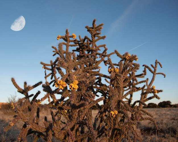 사막에서 노란색 꽃과 함께 야생 선인장 부시
