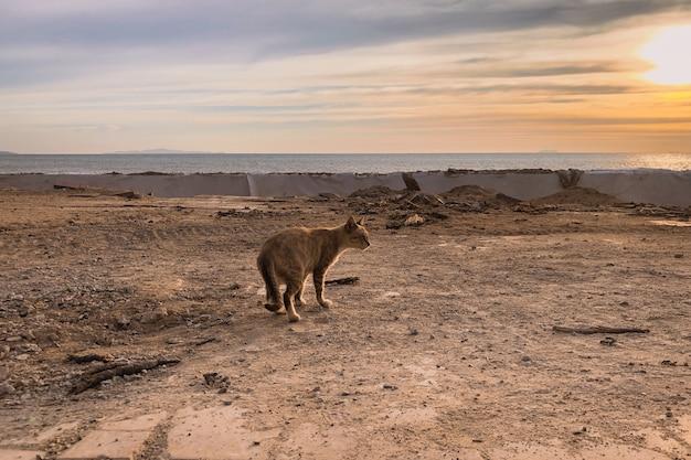 夕暮れ時の山の上の野生の猫