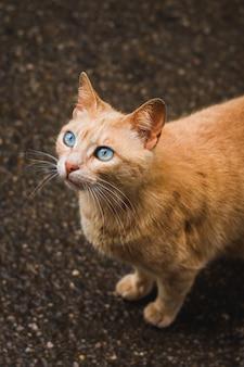 村で遊ぶ野生の猫